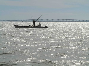 An oysterman harvests oysters from Apalachicola Bay in December 2013.