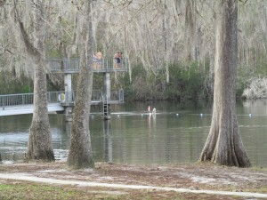 Wakulla Springs State Park. Photo by Bruce Ritchie.